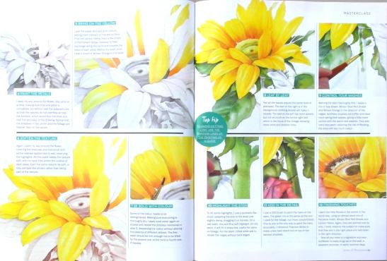 sunflowerarticle2