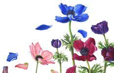 windswept anemones copy