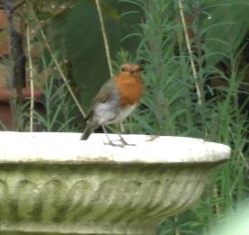 birdbathrobinblog