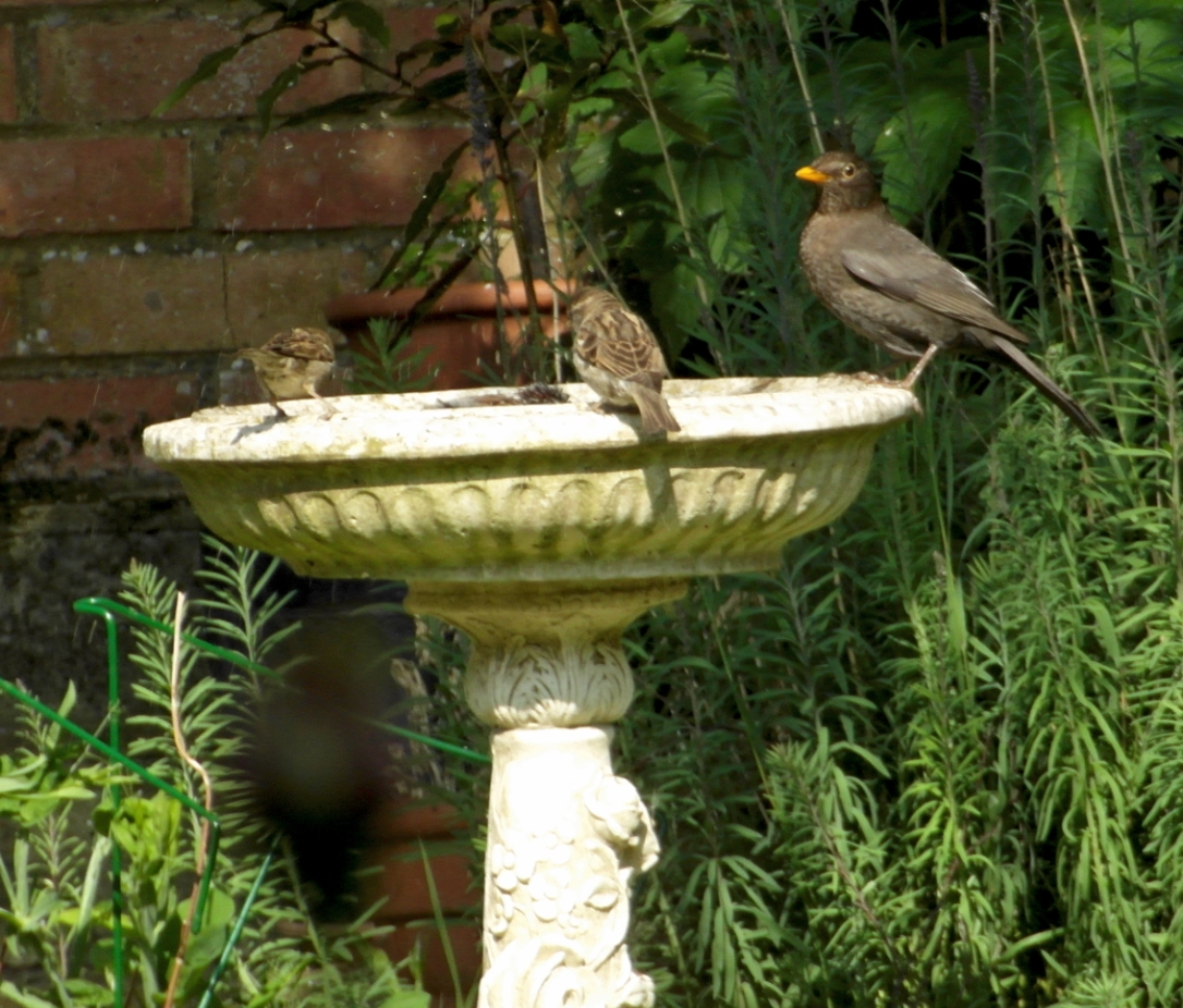 birdbathsharedbath2blog