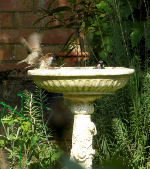 birdbathsparrows4blog
