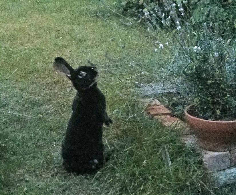 Somebody else likes having white lavender in the garden...