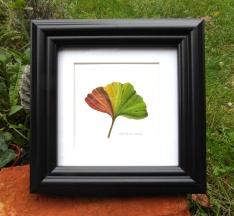 ginkgoleaf02-framed