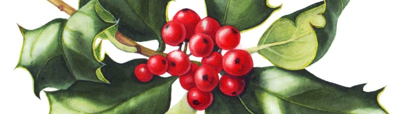 holly-crop