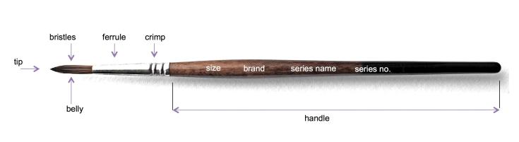 Blog brush-anatomy jpeg