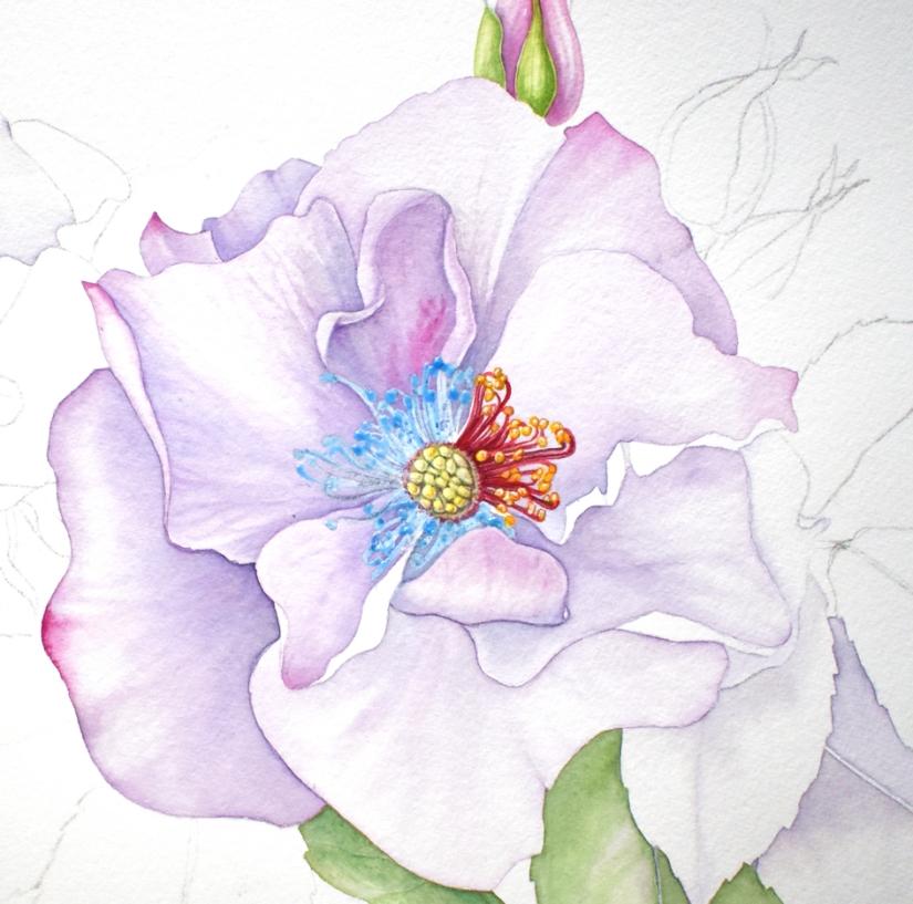 quina lilac odyssey blog