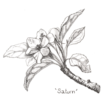 IGBlossom sketch 1 April 20